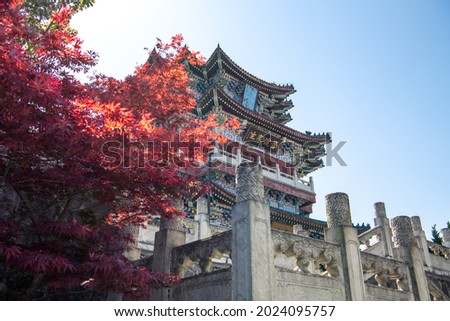 """Japanese maple tree next to the Tianmen Temple in Zhangjiajie, Hunan, China. Translation from Chinese """"生来波哥"""" Born Bokor. Blue sky, copy space for text  商業照片 ©"""