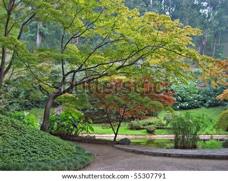 JAPANESE MAPLE TREES IN BEAUTIFUL PARK