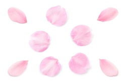 Japanese natural pink cherry blossom petals isolated on pure white background, spring photography