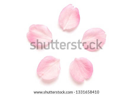 Japanese pink cherry blossom petal isolated on white background #1331658410