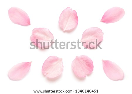 Japanese pink cherry blossom petal isolated on white background