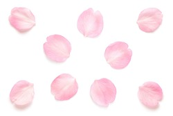 Japanese pink cherry blossom petals abstract on pure white background