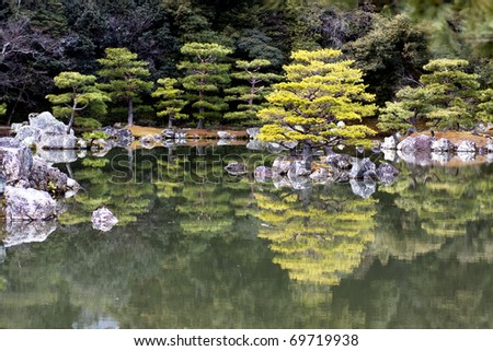 Japanese pruned pine trees on Kinkaku-ji (The Golden Pavilion) lake side, Rokuon-ji Temple, Kyoto, Japan.