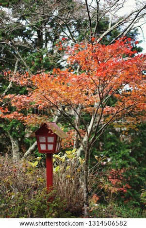 Japanese red lantern with red maple in autumn garden at Chureito Pagoda.