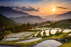 Japanese rice terraces at sunset. Maruyama-senmaida, Kumano, Japan.