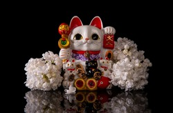 Japanese symbol of good luck maneki neko cat framed by white lilac flowers on a black background with reflection