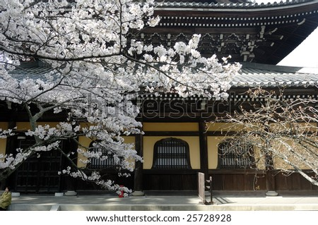 Japanese Temple with cherry blossom