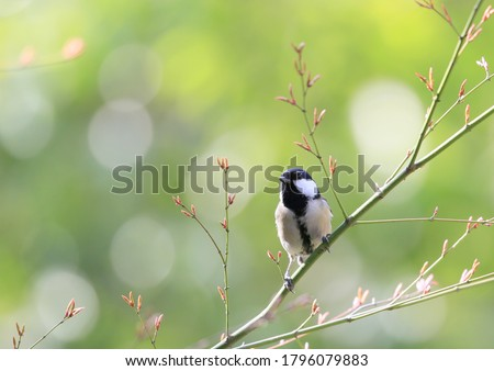 Japanese tit on a tree branch Сток-фото ©
