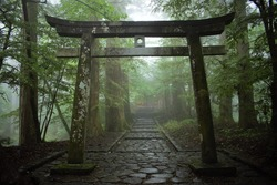 Japanese torii Shinto shrine gate in the forest, Nikko, Japan
