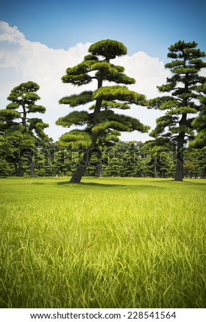 Japanese trees and sky