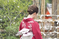 Japanese woman in Kimono reading O-mikuji (fortune prediction)  strips of paper at shinto shrines and buddhist temple in Japan. Fold up the paper attach to a pine tree or a metal wires for bad fortune