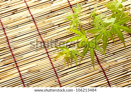 japanese young maple on bamboo