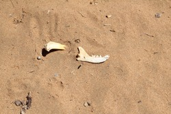 Jar bone of an animal on sand