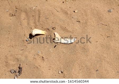 Jar bone of an animal on sand stock photo