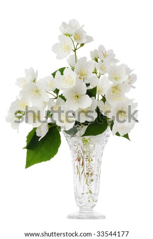 Jasmine bouquet in the vase on white background