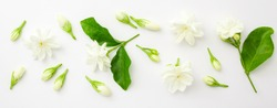 Jasmine flower with green leaf on white background , top view , flat lay.