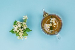 Jasmine flowers and a teapot with jasmine tea on a blue background. An invigorating drink that is good for your health.