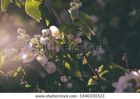 jasmine white flowers background close up #1440330323