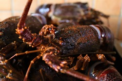 Jasus lalandii also called the Cape rock lobster or West Coast rock lobster is a species of spiny lobster found off the coast of Southern Africa.They are also called crayfish or kreef.