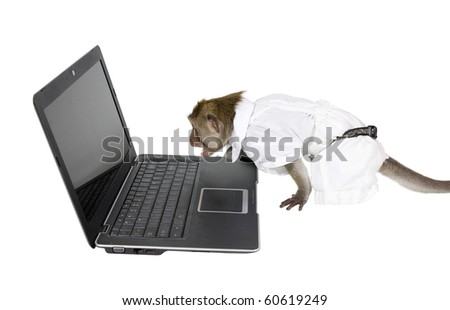 Javanese macaque in a white suit, shouting at the laptop