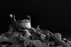 Jaw put on pile of old bone on which has dark background  / Still life image, select focus, space for text and adjustment color black and white for background