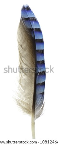 Jay Feather isolated on white background