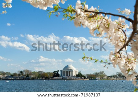 Jefferson Memorial surrounded by cherry blossoms Washington DC - stock photo