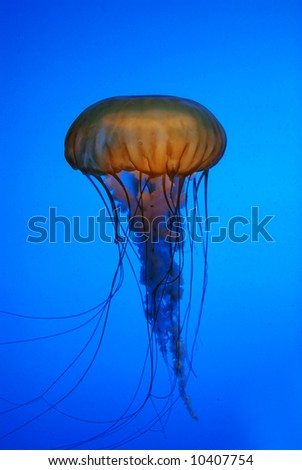 Jelly fish in the ocean
