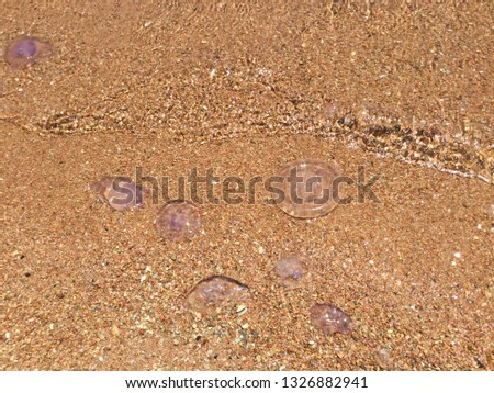 Jelly Fish Over the Beach #1326882941
