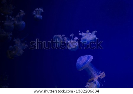 jellyfish in sea water picture