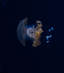 Jellyfish in the deep blue ocean with bright illuminance