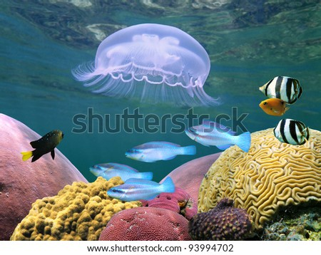 Jellyfish with colorful tropical fish and corals underwater