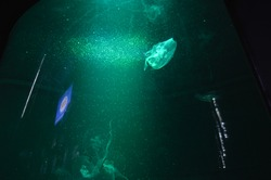 Jellyfish with green light at aquarium.