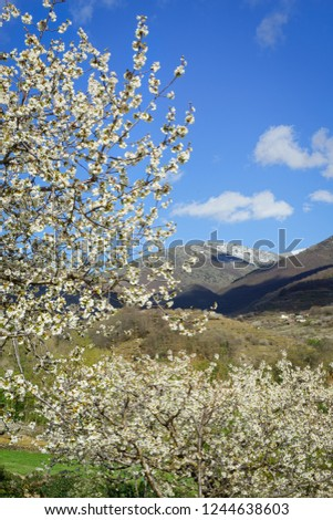 JERTE VALLEY,SIERRA DE GREDOS,CACERES,EXTREMADURA,SPAIN-MARCH,29,2017:Cherry trees from Jerte to Tornavacas Stock photo ©