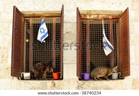 Jerusalem's cats