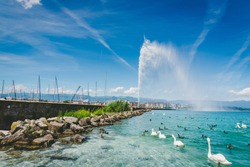 Jet d'Eau fountain on Leman lake with group of white swan and duck in summer
