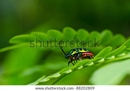 jewel beetle in green nature or in the forest