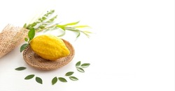 Jewish holiday of Sukkot. Traditional symbols (The four species): Etrog (citron), lulav (palm branch), hadas (myrtle), arava (willow)