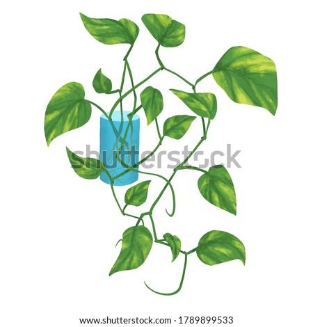 Jiboia - plant series illustration Foto stock ©