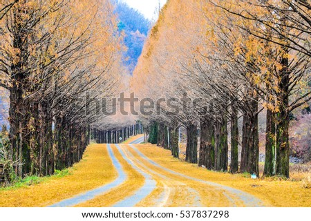 Jinan Metasequoia road #537837298