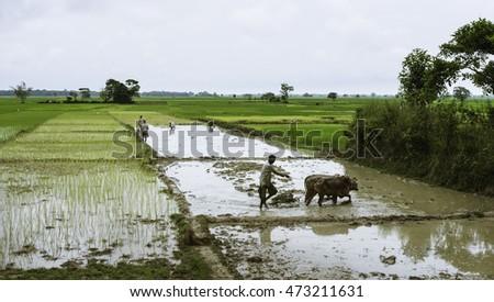 jorhat  india   august 23  2011 ...