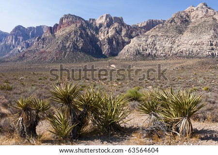 Joshua Tree at the Red Rock Canyon National Conservation Area in Nevada located west of Las Vegas and showcases large red sandstone peaks and walls.