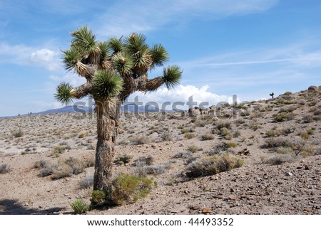 Joshua tree, California, Southwest USA - stock photo