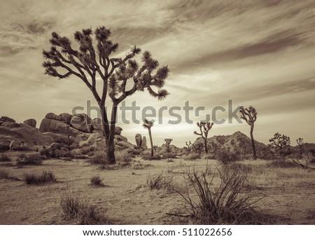 joshua tree landscape series 2