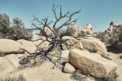 Joshua Tree National Park barren landscape, color toned picture, California, USA.