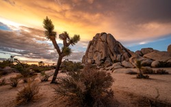 Joshua Tree National Park in California. The cloudy sunset was shot just after a big storm. This situations leaded to a breathtaking cloudy sky that took fire during sunset.