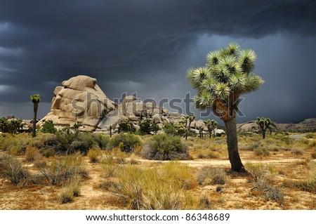 Joshua Tree National Park, USA