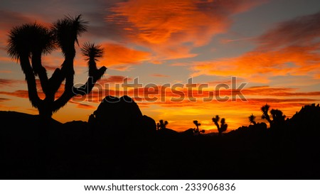 Joshua Tree Sunset Cloud Landscape California National Park