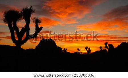 Joshua Tree Sunset Cloud Landscape California National Park