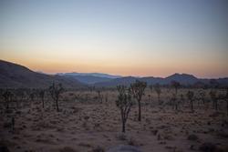 Joshua tree sunset landscape mountains